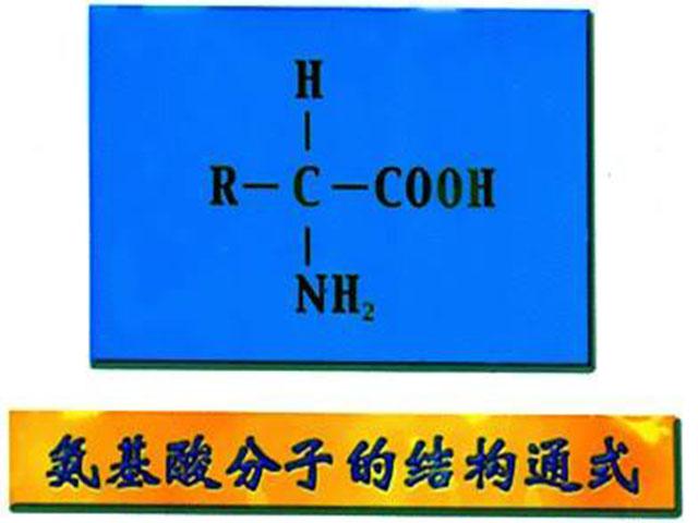 氨基酸分析