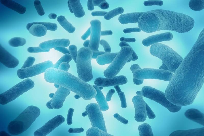 样品中微生物的测定