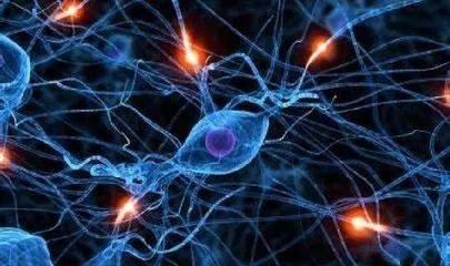 生物样品中神经递质的测定