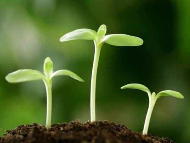 植物类样品